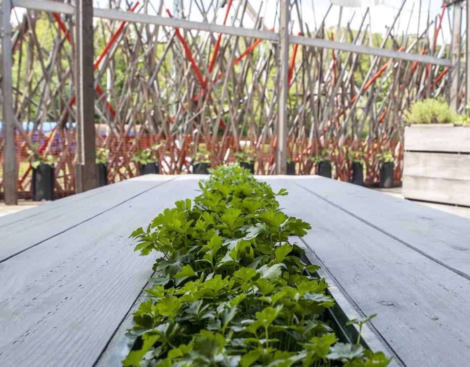 CDT29_Urban_Gardening_Tischbepflanzung_AR_2702_rg