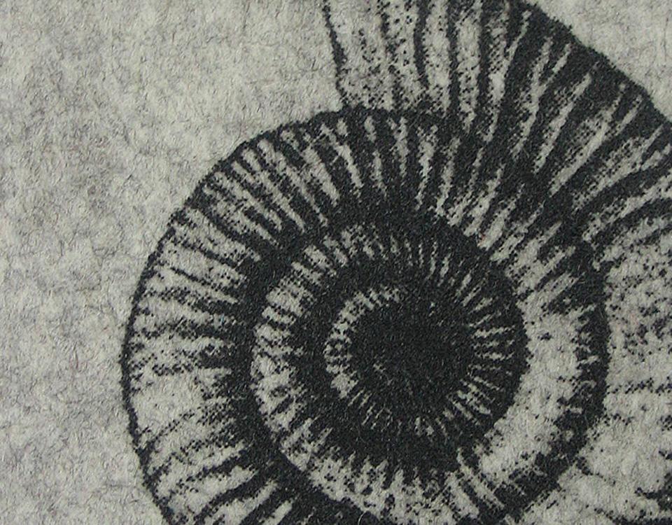 Ammonit-Filzl1_rg